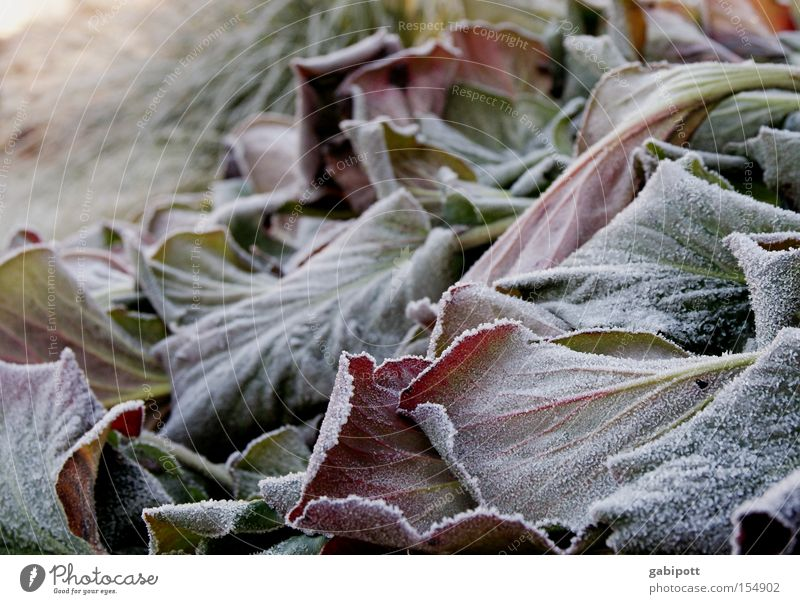 Winter Leaves Vol.2 Exterior shot Detail Living or residing Flat (apartment) Plant Ice Frost Flower Leaf Wild plant Park Wait Cold Calm Frozen Hoar frost Canned