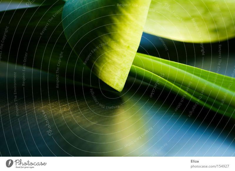 Nature Green Leaf Dark Spring Macro (Extreme close-up) Reflection Mirror Stalk Tulip Noble Juicy