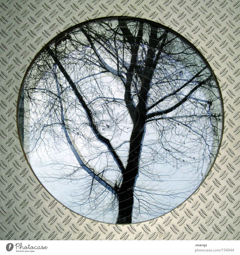 Tree Plant Autumn Cold Window Architecture Style Metal Glass Fear Crazy Exceptional Circle Round Uniqueness Transience