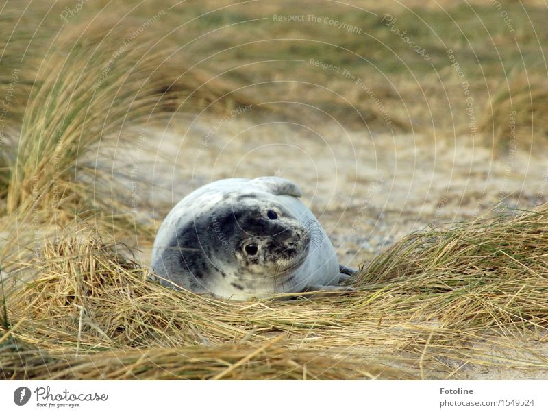 What are you looking at? Environment Nature Plant Animal Elements Sand Winter Beautiful weather Grass Coast Beach Wild animal Animal face Pelt 1 Baby animal