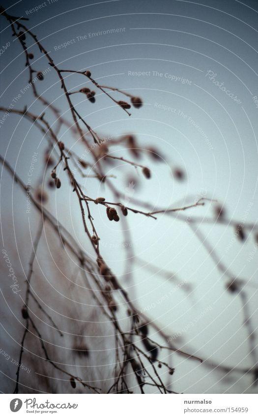 Sky Colour Winter Cold Arrangement Bushes Branch Frost Delicate Fine