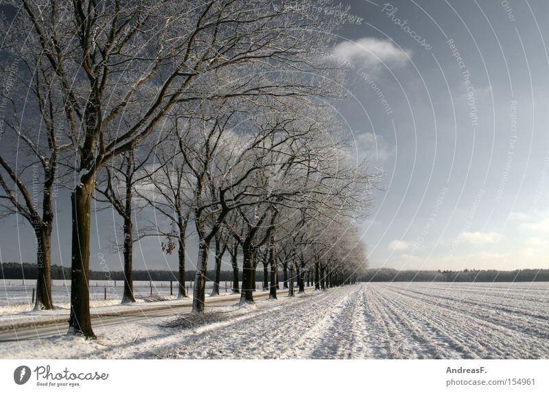 ...a winter fairy tale Winter Snow Snowscape Frost Winter forest Winter vacation Winter festival Cold Blue sky Sun Avenue Tree Landscape Romance January Street