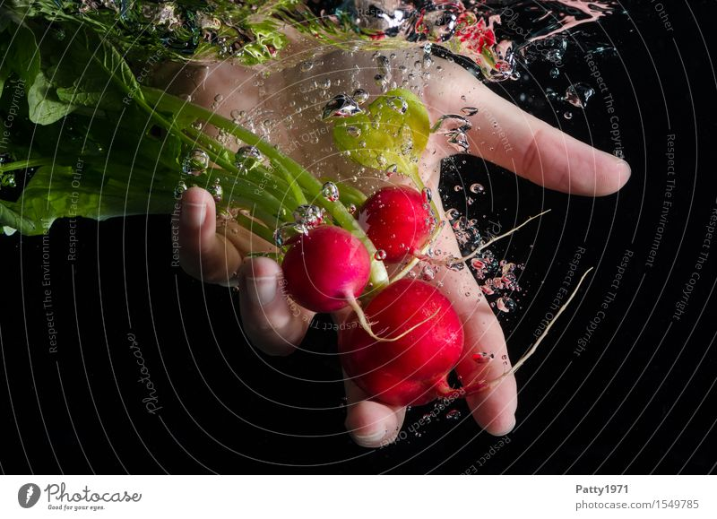 radish Food Vegetable Radish Nutrition Organic produce Vegetarian diet Hand 1 Human being Fresh Healthy Delicious Clean Green Red Cleanliness To enjoy