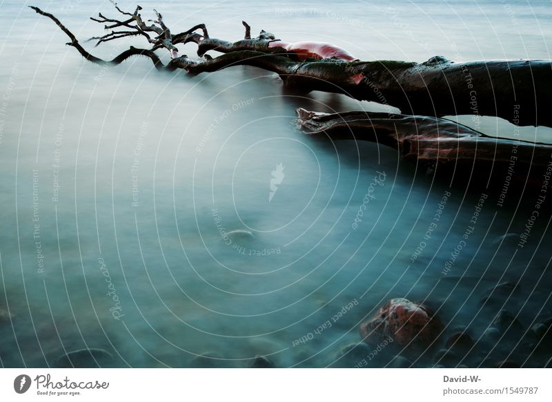 Nature Old Water Tree Dark Cold Environment Autumn Coast Background picture Death Fog Fear Tree trunk Lakeside Painting and drawing (object)