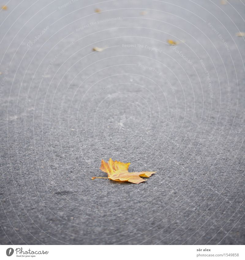 Nature Plant Loneliness Leaf Environment Street Sadness Autumn Natural Gray Orange Climate Transience Change Grief Past