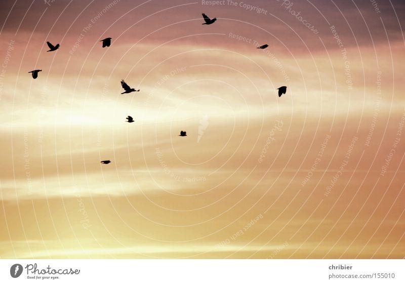 Beautiful Sky Calm Clouds Bird Fog Wind Weather Flying Free Sunrise Aviation Crow Flock of birds Morning fog