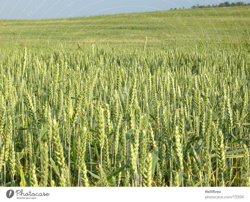 Growing seed [2] Field Hill Grain eras