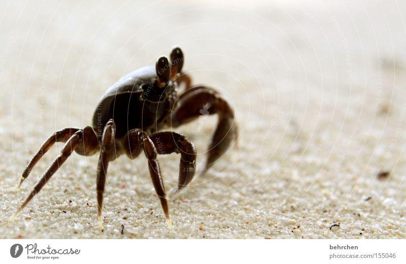 WALTER Vacation & Travel Beach Ocean Animal Coast Observe To enjoy Caution Seychelles La Digue Paradise Honeymoon Dream island Praslin sand crab Claw