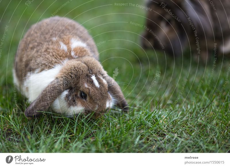 family enlargement Easter Spring Grass Meadow Garden Pet Pelt Pygmy rabbit Hare & Rabbit & Bunny Burnet Mammal Rodent Hare ears rabbit face 1 Animal hare spoon