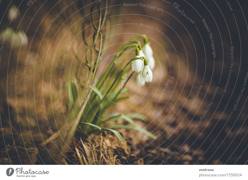 Nature Plant Beautiful Green White Flower Landscape Leaf Blossom Spring Style Garden Brown Together Earth Illuminate