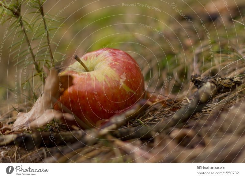 ...and apple juice gives you poker power! Fruit Lie Apple Forest Nature Windfall Autumn Organic produce Colour photo Subdued colour Exterior shot