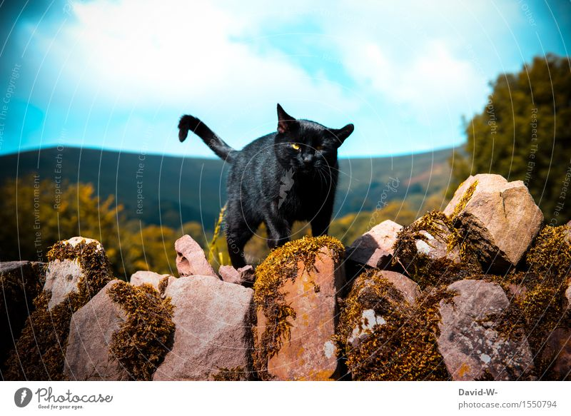 Cat Nature Beautiful Summer Landscape Clouds Animal Dark Black Environment Wall (building) Autumn Spring Movement Wall (barrier) Elegant