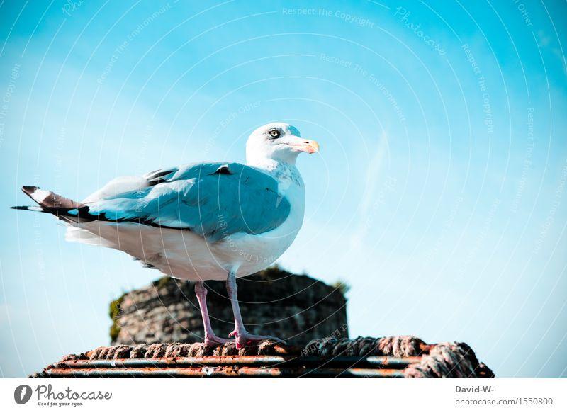 Sky Nature Beautiful Summer Calm Animal Environment Spring Coast Bird Wait Island Wing Observe Beautiful weather Baltic Sea