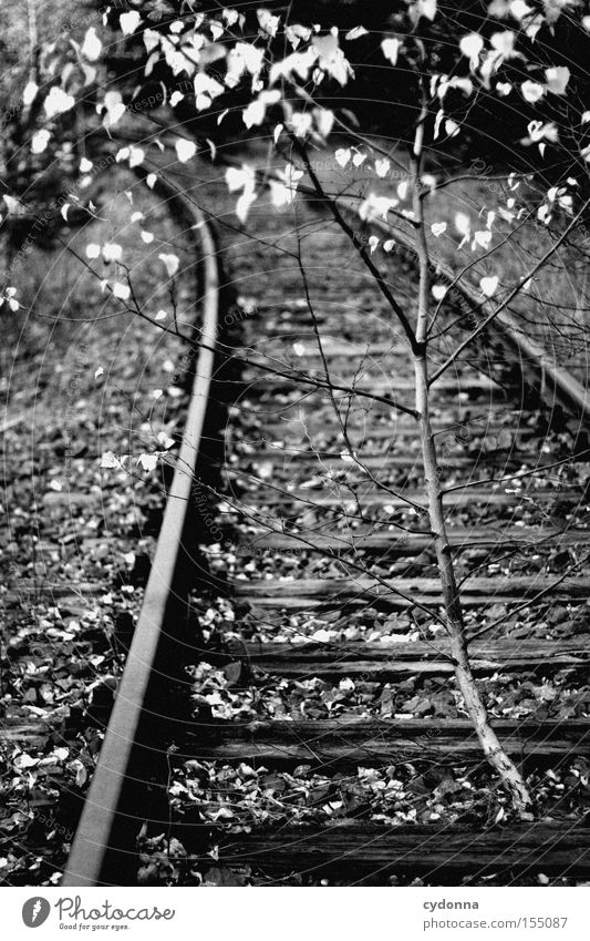 Nature Tree Calm Loneliness Autumn Time Growth Transience Railroad tracks Derelict Repeating Birch tree Conquer Cardiovascular system Shut down