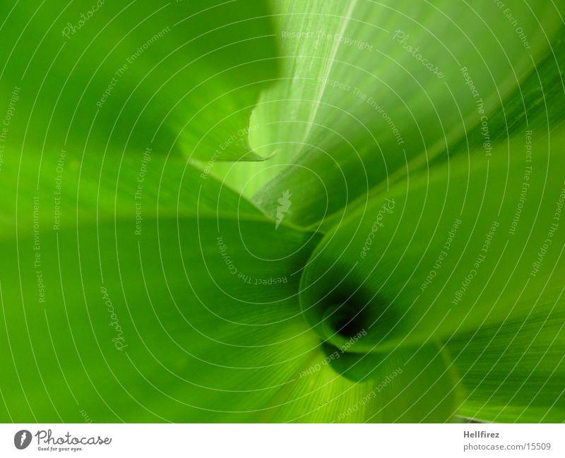 Bizarre Forms [2] Leaf Green Flashy Silhouette Maize Profile Contrast