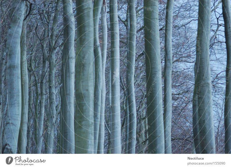 Nature Tree Winter Forest Moody Rügen Spooky Ghost tree