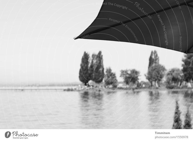 Sky Nature Plant Water Tree Landscape Calm Black Gray Lake Bushes Beautiful weather Lakeside Sunshade Lake Constance