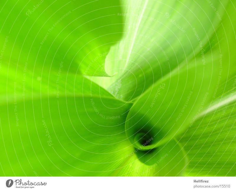 Bizarre Forms [4] Leaf Green Flashy Silhouette Maize Profile Contrast