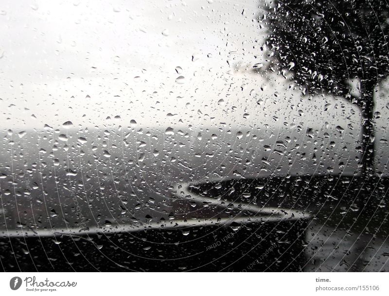 Tree Environment Gray Wall (barrier) Rain Weather Horizon Wet Drops of water Climate Vantage point Window pane Bad weather Comfortless View from a window