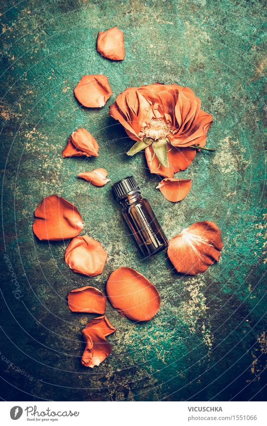 Rose oil. Essential oil with rose petals Style Beautiful Cosmetics Perfume Healthy Wellness Well-being Senses Relaxation Fragrance Spa Massage Nature Plant