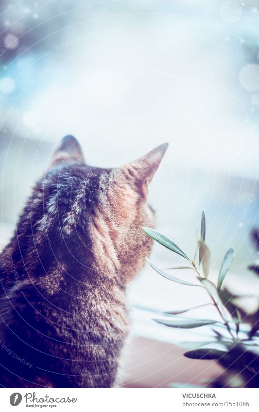 Cat looks out the window Style Flat (apartment) Nature Animal Pet 1 Moody Love of animals Design Background picture Window Plant Living or residing Cozy Calm