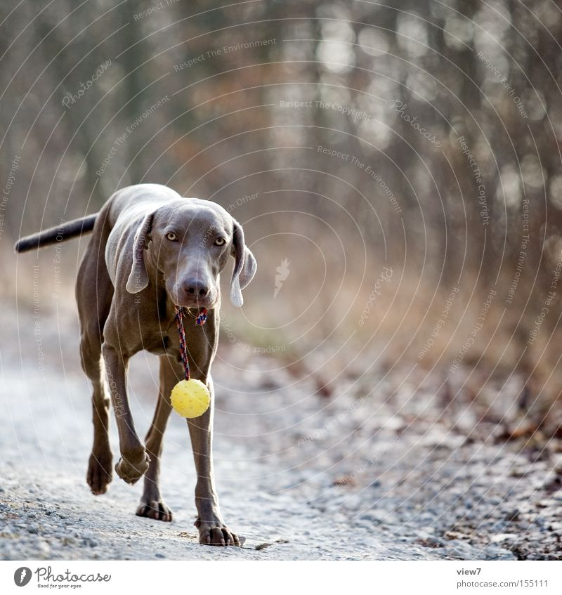 Joy Forest Autumn Dog Lanes & trails Nose Walking Search Ball Pelt Odor Mammal Pride Carrying Wear Emotions