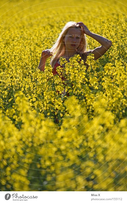 Woman Nature Youth (Young adults) Flower Summer Yellow Meadow Spring Freedom Hair and hairstyles Field Blonde Adults Wind Bushes