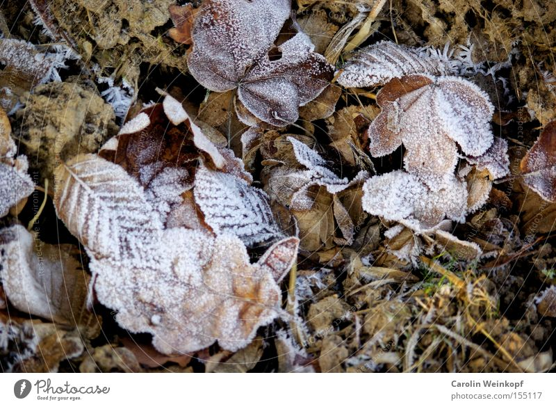 Nature Winter Leaf Cold Snow Ice Frost Frozen