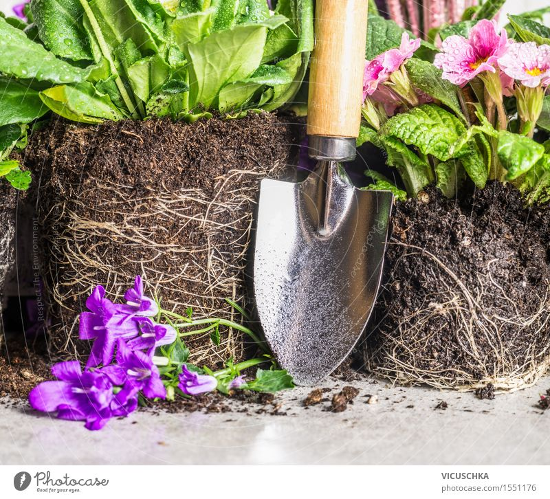 Hand shovel and garden flowers Style Garden Decoration Table Nature Plant Spring Summer Autumn Flower Park Blossoming Shovel Earth Root Part of the plant