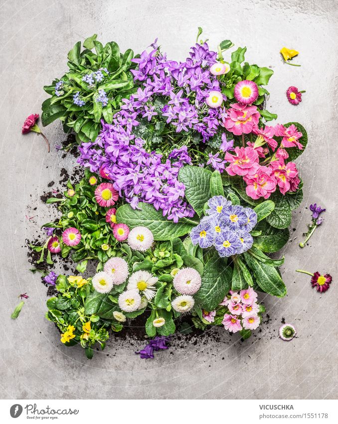 Various summer flowers in pots for garden Style Design Leisure and hobbies Summer Garden Table Nature Plant Spring Autumn Flower Leaf Blossom Park Stone