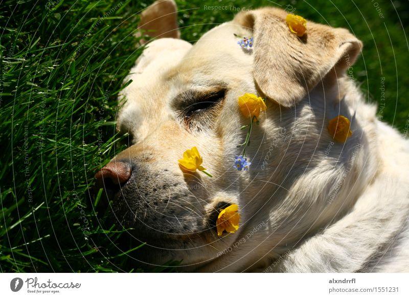 DAYDREAMING Nature Flower Grass Blossom Garden Animal Pet Dog 1 Relaxation To enjoy Sleep Free Happy Cute Blue Yellow Green White Euphoria Fatigue Colour photo