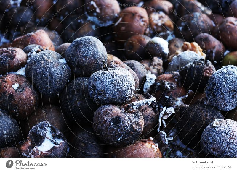 Winter Snow Ice Brown Fruit Frost Transience Apple Frozen Spoiled Heap Dispose of Plant Dessert Putrid Malodorous