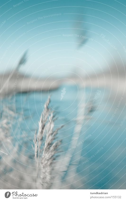 Winter at the lake Lake Blue Cold Grass Dream Gray Nature Blur lensbaby