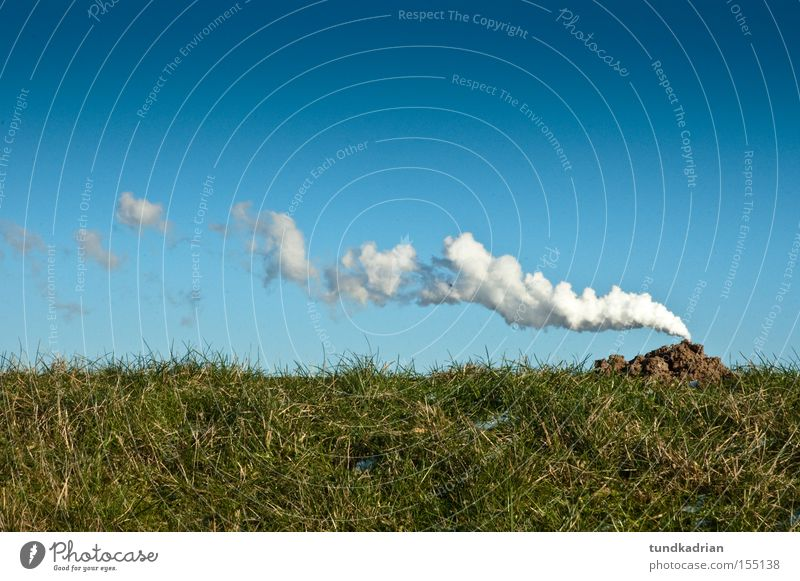 The mole smokes. Mole Exhaust gas Blue Green Sky Cigarette Meadow Smoke