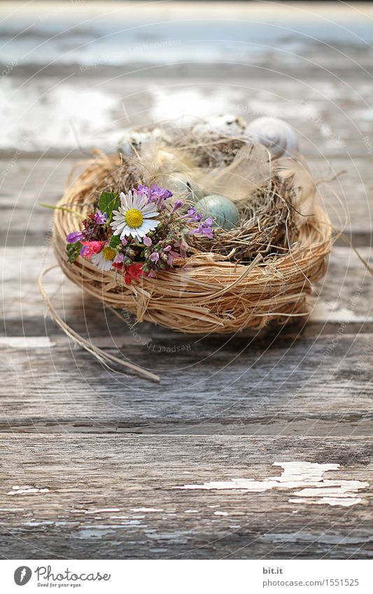 Nature Old Spring Natural Grass Wood Feasts & Celebrations Brown Decoration Easter Moss Vintage Easter egg Nest Easter Bunny Easter egg nest