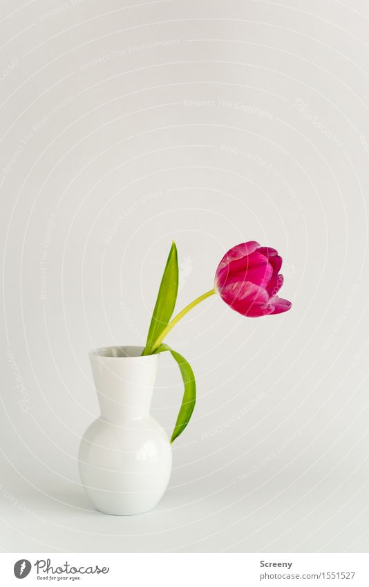 Spring to go Flower Tulip Vase Natural Green Pink White Esthetic Nature Still Life Blossom Easter Colour photo Interior shot Studio shot Deserted Copy Space top