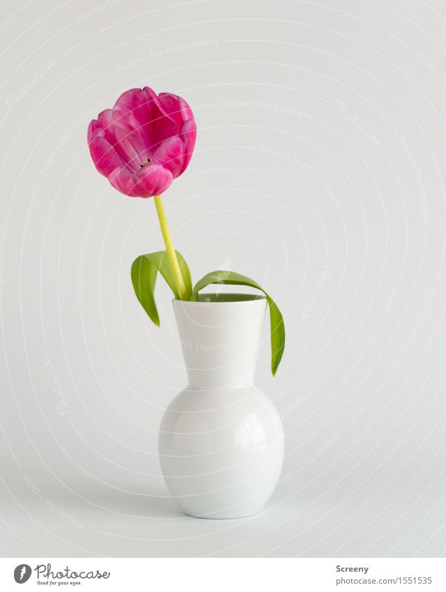 Spring to go #2 Nature Plant Flower Tulip Leaf Blossom Vase Green Pink White Colour photo Interior shot Studio shot Detail Deserted Day