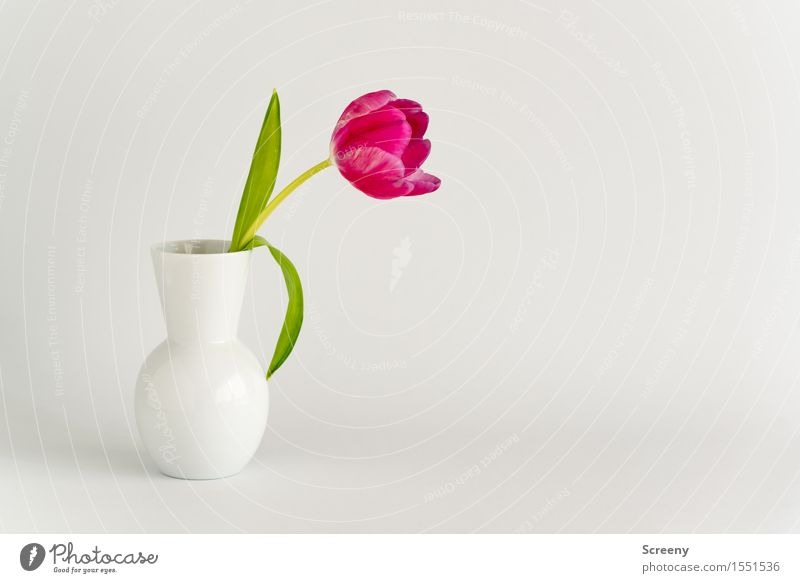 Spring to go #3 Plant Flower Tulip Leaf Blossom Vase Green Pink White Nature Colour photo Interior shot Studio shot Deserted Copy Space right Day