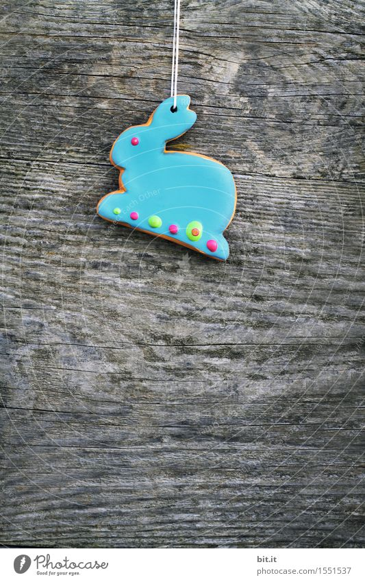 """""""Blue Monday Bunny. Feasts & Celebrations Easter Hare & Rabbit & Bunny Chocolate Easter Bunny Easter egg nest Easter wish Checkmark Wood Vintage Colour photo"""