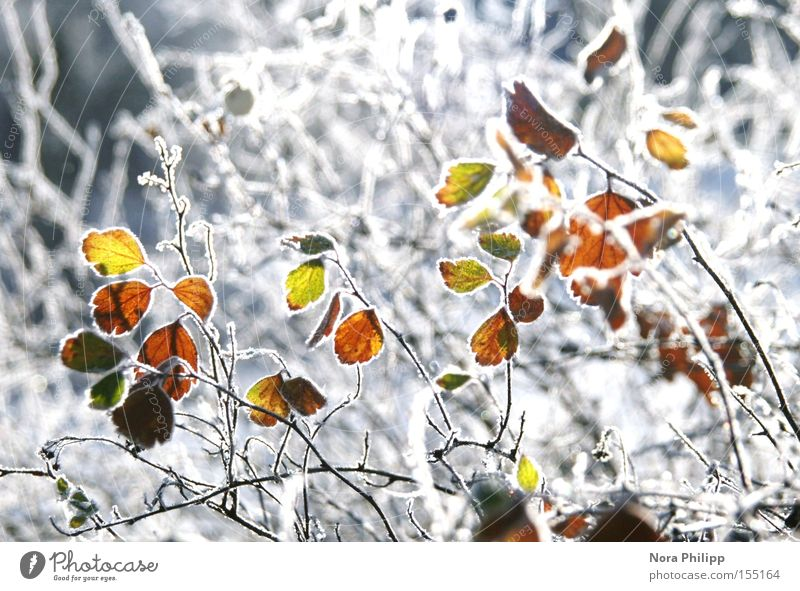 In the winter. Colour photo Multicoloured Exterior shot Morning Winter Snow Lamp Environment Nature Plant Climate Weather Ice Frost Bushes Leaf Glittering Cold