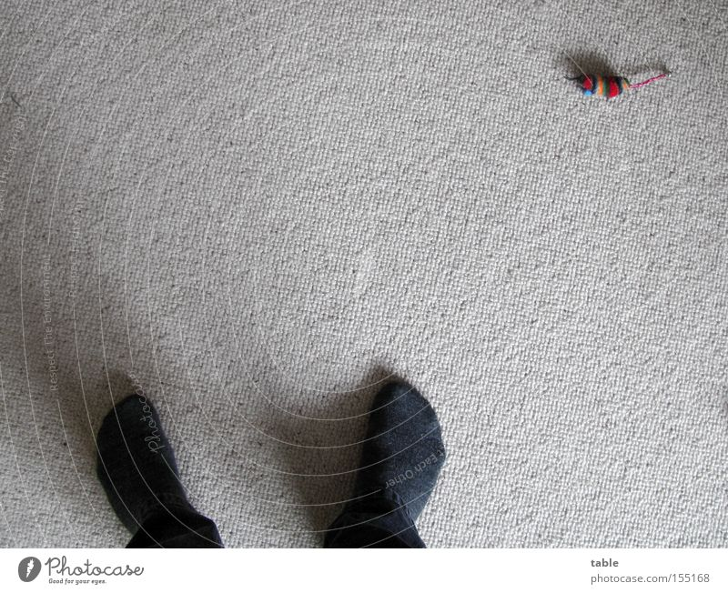 nobody plays with me... Carpet Stockings Trouser leg Man Shadow Pet Boredom Living room Animal Feet Mouse sleeping :) Bird's-eye view Cuddly toy