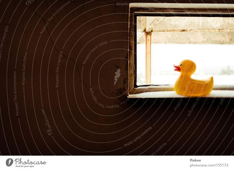 Winter Animal Yellow Dark Snow Window Bright Bird Vantage point Factory Duck Window board Squeak duck