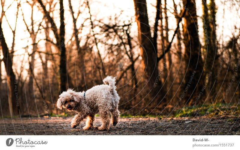 Dog Nature Beautiful Landscape Animal Forest Environment Autumn Movement Playing Small Contentment Leisure and hobbies Joie de vivre (Vitality) Observe Cute