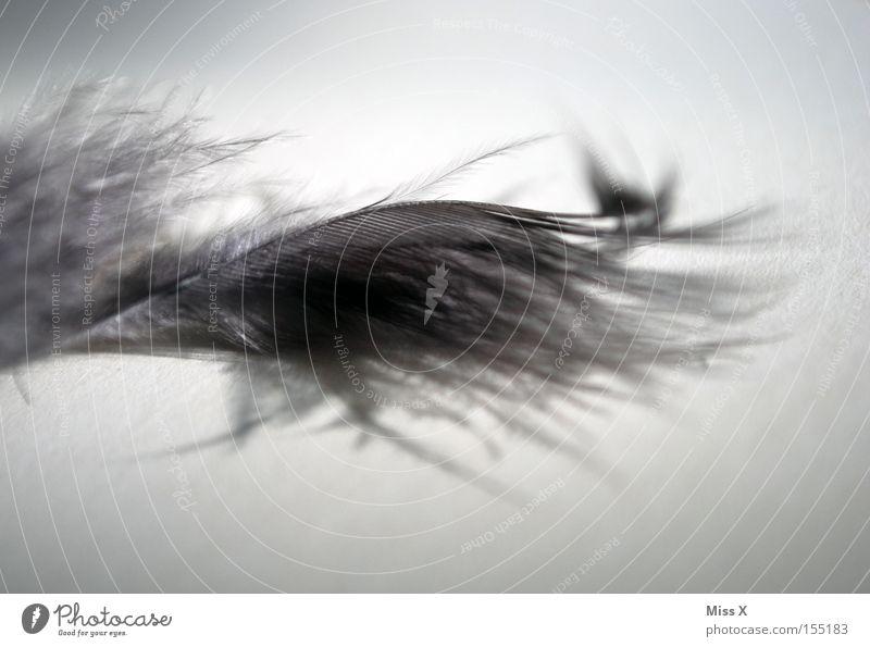 Gray Bird Soft Feather Decoration Easy Cuddly Handicraft Downy feather Boa