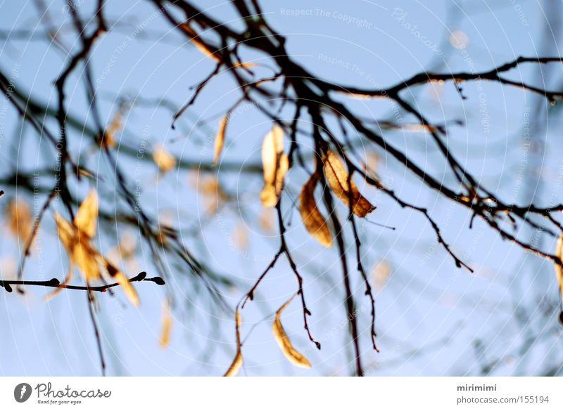 Tree Blue Winter Leaf Autumn Landscape Branch