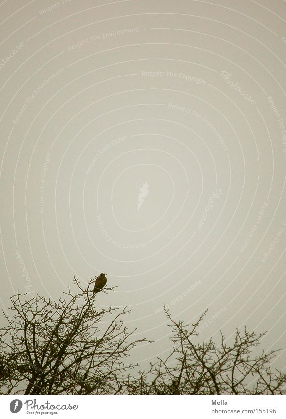 Nature Tree Loneliness Animal Gray Bird Environment Sit Gloomy Branch Natural Treetop Twig Branchage Dreary Crouch