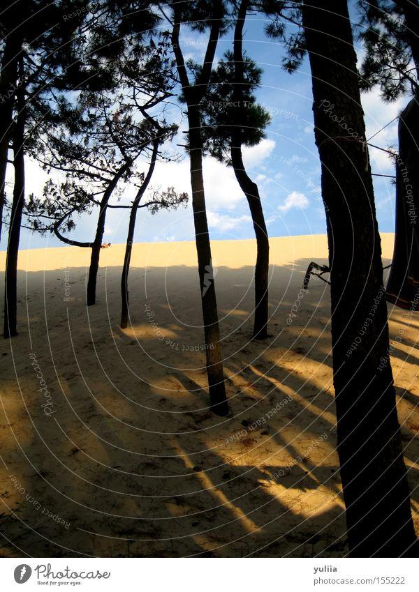 sand dune Beach Sand Tree Stone pine Sky Clouds Beach dune Shadow Incline