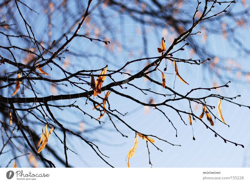 Tree Blue Winter Leaf Autumn Landscape Branch