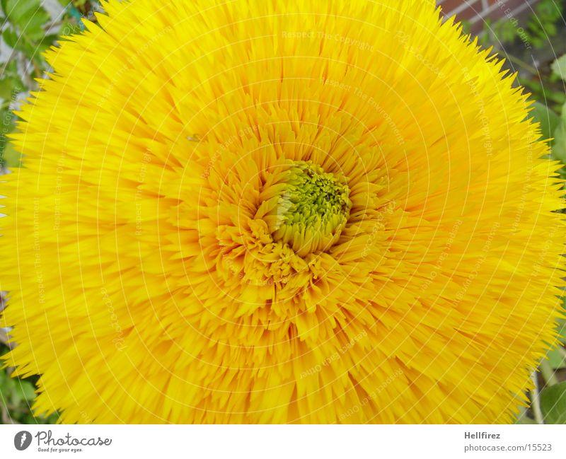 The Awakening Flower Spring Macro (Extreme close-up) Yellow Blossoming