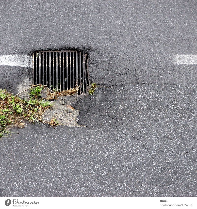 brush clown Foliage plant Traffic infrastructure Street Metal Variable Colour Drainage Gully Asphalt Grating Iron Regulation Detail Grass Deserted